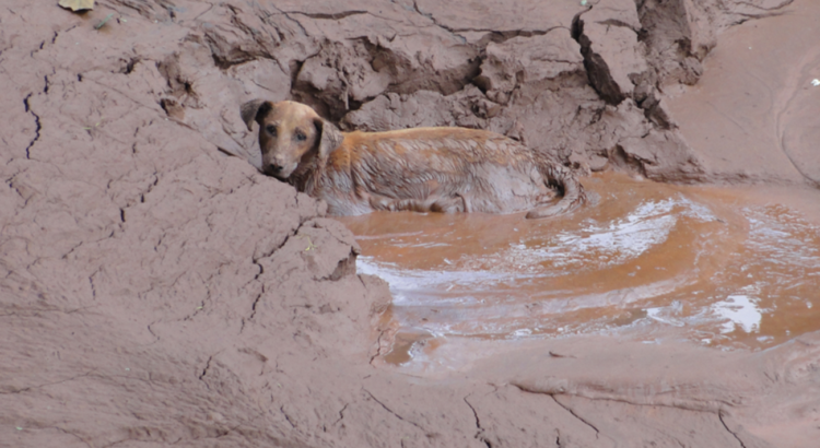 barragem cachorro