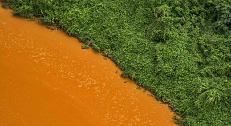 Rio Doce: Contraste de cores entre a vegetação e a água tomada pela lama / Instituto Ultimos Refugios