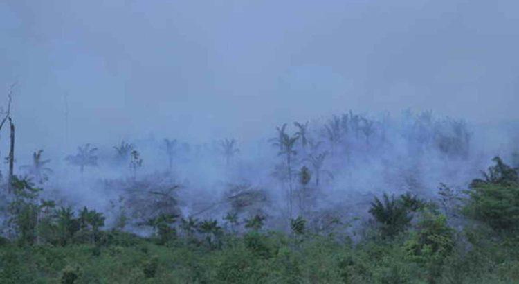 O fogo ameaça destruir completamente a floresta dos Awá isolados (foto de arquivo). © Survival International